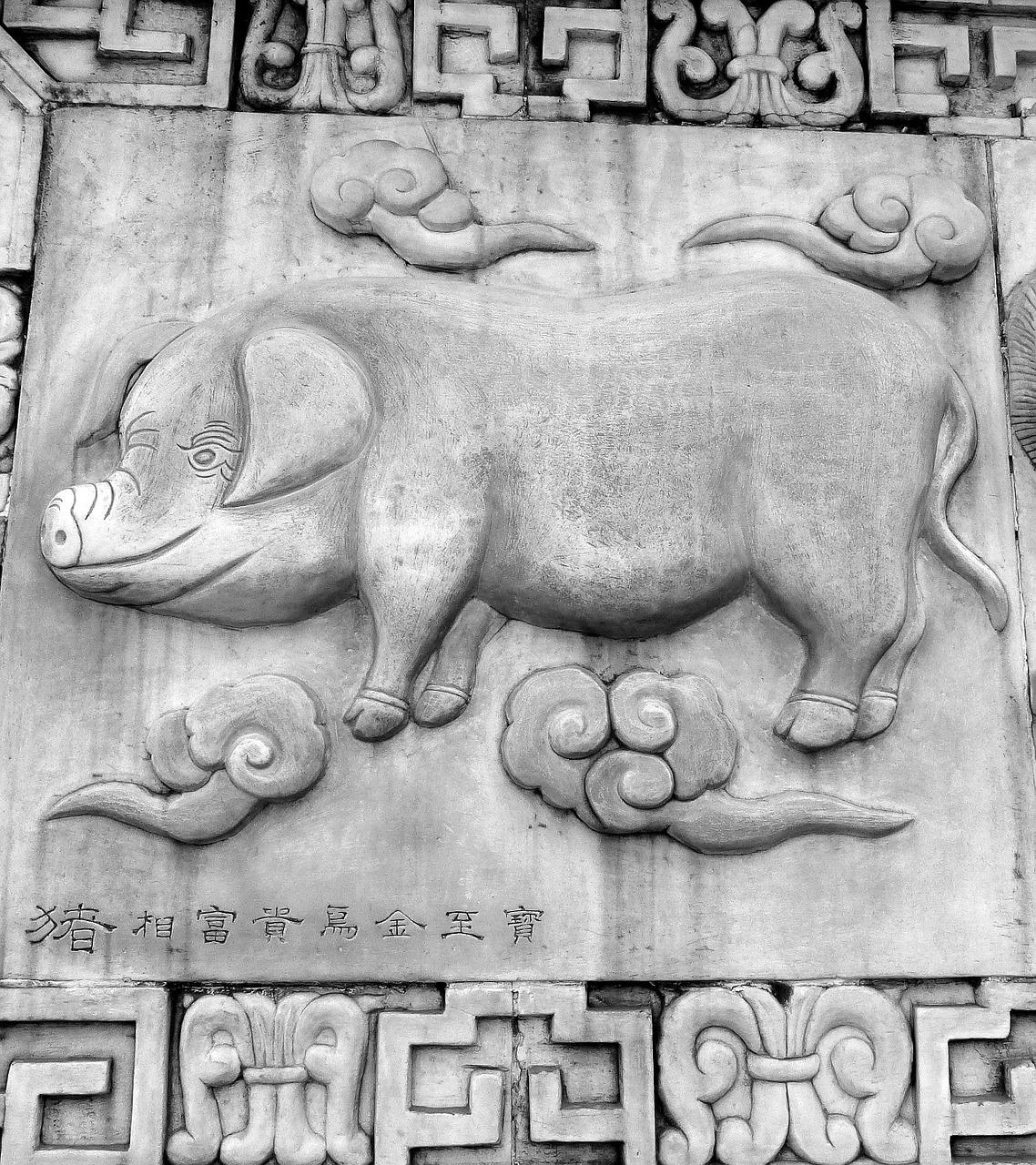 Porco - Horóscopo Chinês
